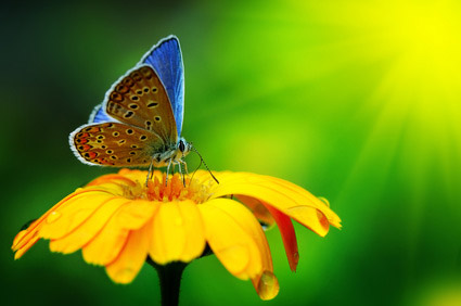 fotografia macro motyla