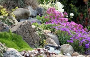 zaprojektowny ogród skalny